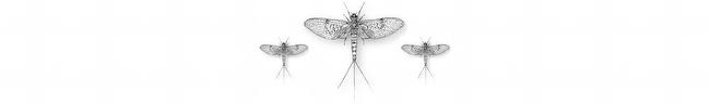 mayfly-triade-650