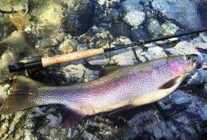 raimbow trout USA